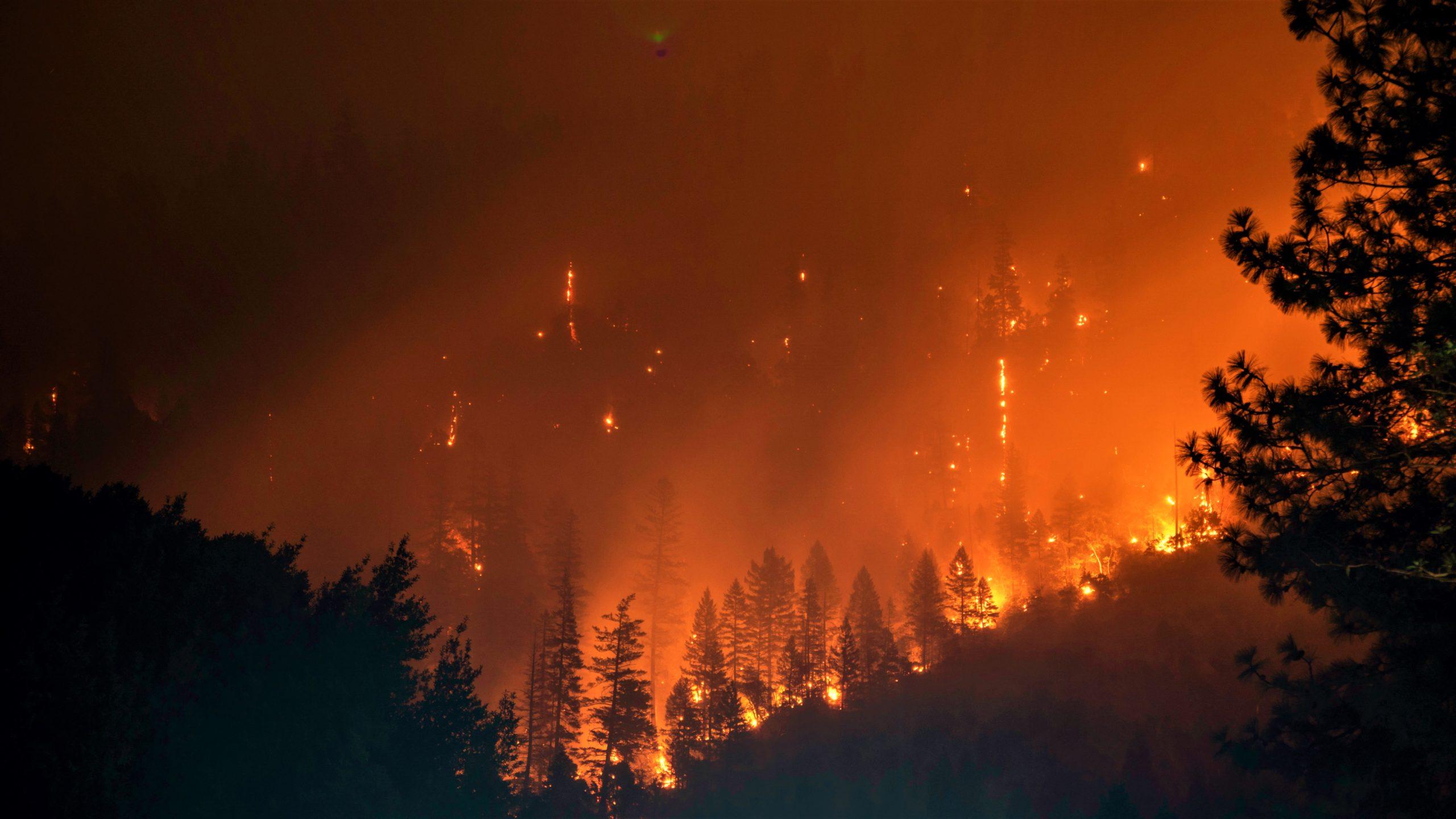 Burning forest in Klamath National Forest, Yreka, USA. By Matt Howard